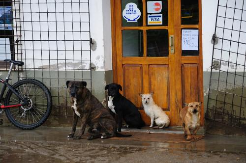 …Hundeparade